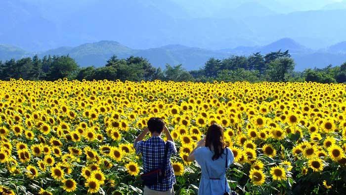 Nâng mũi Hàn Quốc ở Nghệ An